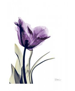 Albert Koetsier, FLOWERS IN PURPLE IV