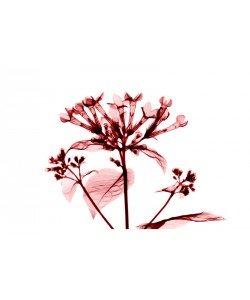 Albert Koetsier, FLOWERS IN PINK III