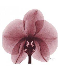 Albert Koetsier, FLOWERS IN DARK RED I