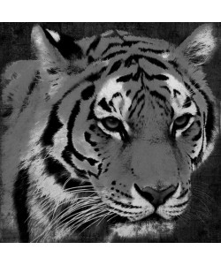 Jace Grey, BLACK AND WHITE TIGER