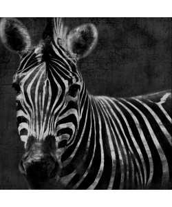 Jace Grey, BLACK AND WHITE ZEBRA