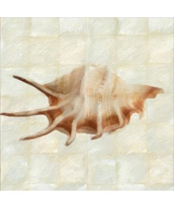Taylor Greene, MOTHER OF PEARL SHELL I