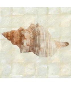 Taylor Greene, MOTHER OF PEARL SHELL II