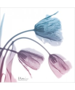 Albert Koetsier, SOFT TULIPS PINK AND BLUE II