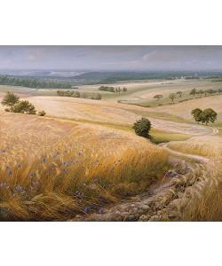 Patrick Creyghton, Corn fields