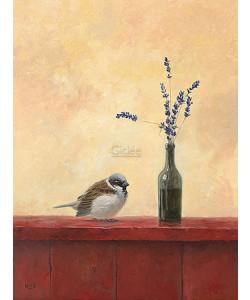 Ulco Glimmerveen, Sparrow