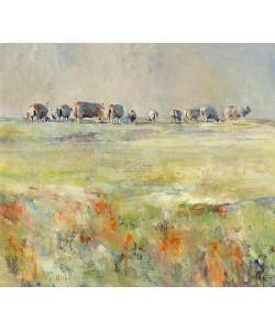 Hiske Wiersma, Sheep