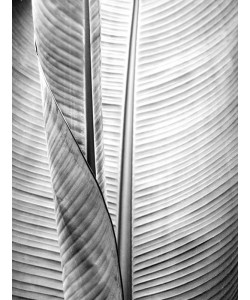 Kimberly Allen, Metal BW Plant 1