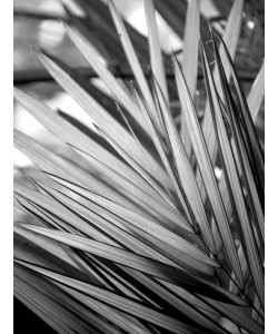 Kimberly Allen, Metal BW Plant 2