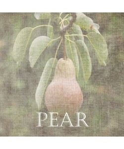 Sheldon Lewis, Pear