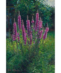 Eric De Vree, Purple loosestrife