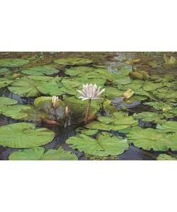 Joke Frima, Tropical Water Lily