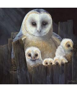 Geke Hoogstins, Nesting barn owls