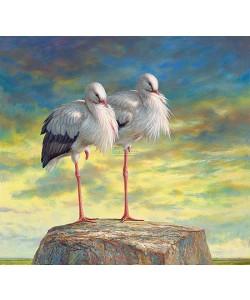 Erik van Ommen, Storks