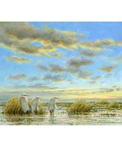 Erik van Ommen, Great Egrets
