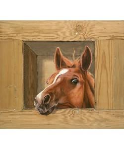 Johan Mulder, Paard