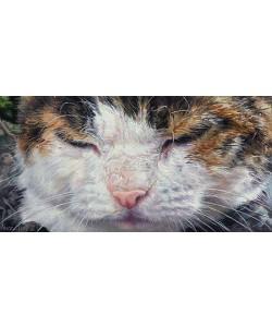 Adriana van Zoest, Cat eyes