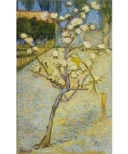 Vincent van Gogh, Kleiner blühender Birnbaum. Arles, April 1888.