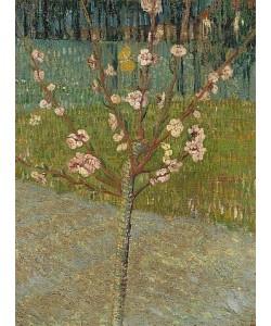 Vincent van Gogh, Blühender Mandelbaum. Arles, 1888.