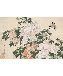 Katsushika Hokusai, Rosafarbene und rote Pfingstrosen und ein Schmetterling.