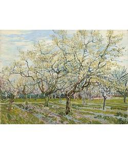 Vincent van Gogh, Der weiße Obstgarten. 1888