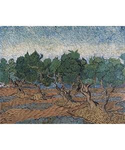 Vincent van Gogh, Olivenhain. 1889