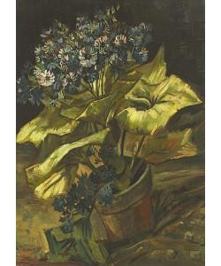 Vincent van Gogh, Zinerarie. 1885