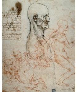 Leonardo da Vinci, Proportionsschema des menschlichen Kopfes und Reiterstudien