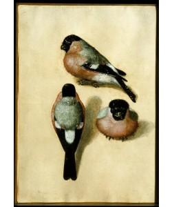 Albrecht Dürer, Ein Vogel in drei Positionen