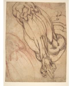 Michelangelo Buonarroti, Anatomical Studies of a Leg (recto)