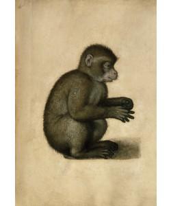 Albrecht Dürer, Affe
