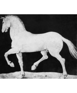 Albrecht Dürer, Pferd