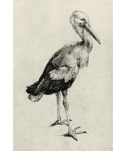 Albrecht Dürer, Storch