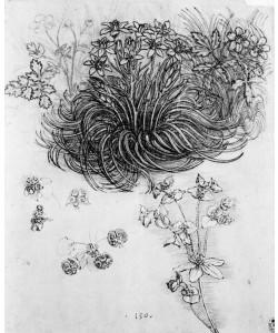 Leonardo da Vinci, Studie einer Sternanemone und anderer Pflanzen