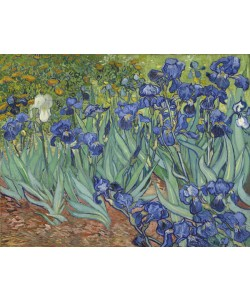 Vincent van Gogh, Irises, 1889 (oil on canvas)