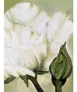 Heidi Gerstner, Weiße Rose mit Knospe