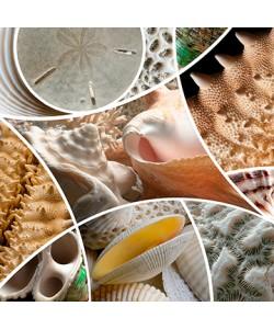 Roberto Scaroni, Patch Shells