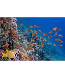 vlad61_61, Tropical fish and Hard corals