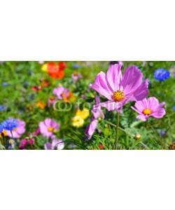 S.H.exclusiv, Grußkarte - Blumenwiese - Sommerblumen