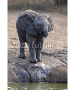 Alta Oosthuizen, Breeding herd of elephant drinking water at a small pond