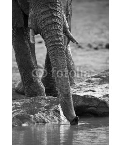 Alta Oosthuizen, Elephant herd playing in muddy water with fun