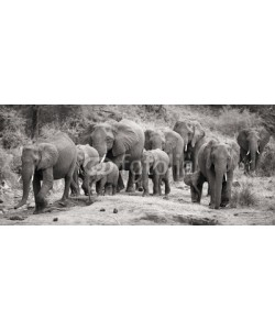 Alta Oosthuizen, Elephant herd calf and mother charge towards water hole