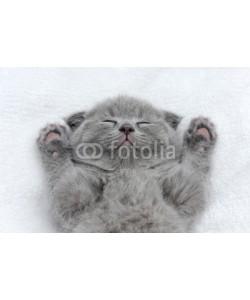 byrdyak, Kitten on white blanket