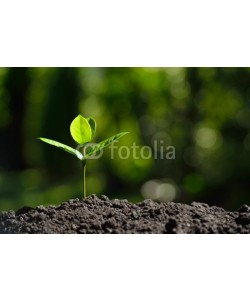 amenic181, Young plant in the morning light on nature background