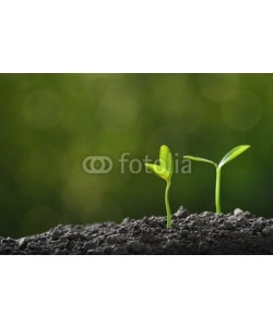 amenic181, Young plant in the morning light growing out from soil