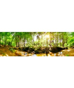 John Smith, Beautiful forest in spring with bright sun shining through the trees