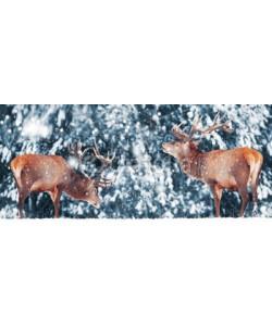 delbars, Two noble deer male against in winter snow forest. Artistic winter landscape. Christmas image. Winter wonderland.