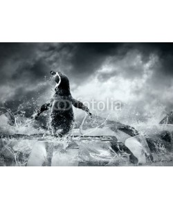 Andrii Iurlov, Penguin on the Ice in water drops.