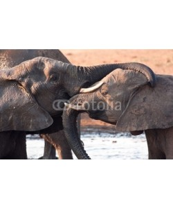 Alta Oosthuizen, Two elephants greeting at waterhole lovingly