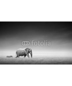 JohanSwanepoel, Elephant with zebra (Artistic processing)